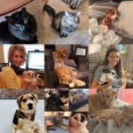 Employee's pet photos for working from home during COVID-19 pandemic